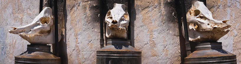 "Photo: ""Head of Lamar"" ~ San Luis Potosi, Mexico © 2011 Skip Hunt"