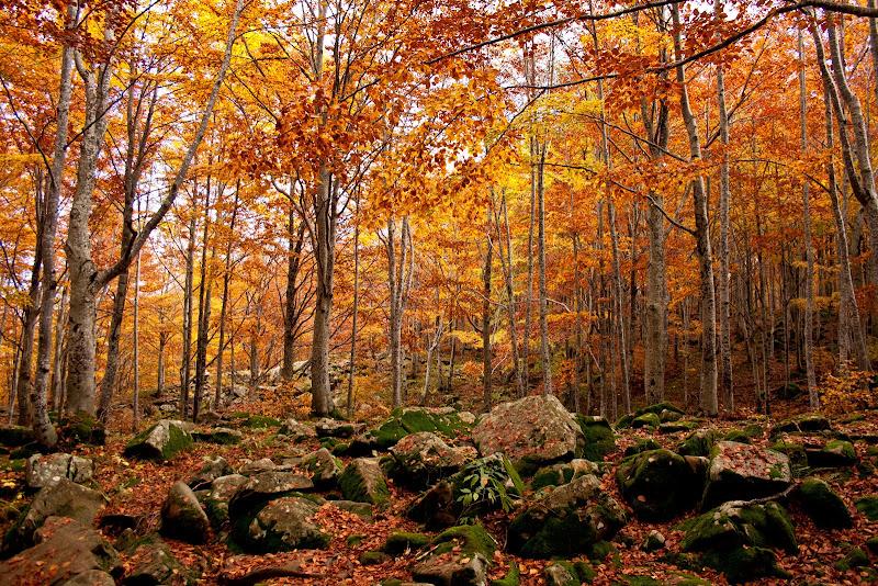 Colori di autunno di Gianluca Presto
