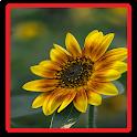 Flower Wallpaper icon