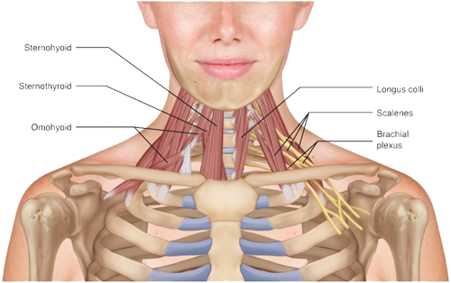 Neck Pain Relief System