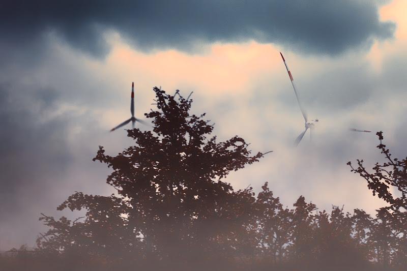 Wind in the fog di amedeozullojr