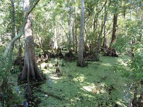 Photo: Réserve Jean Lafitte au Sud de New Orleans, un Parc National