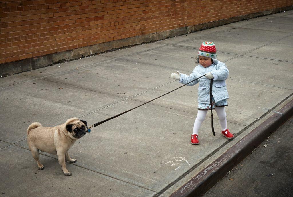 Boy-Pulling-Dog