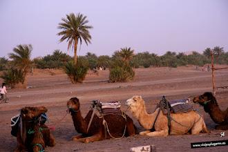 Photo: 24: Erg: Es la región arenosa de un desierto. Viene de la palabra árabe erg (عرق ) usada para definir esas zonas del desierto del Sahara. Los erg activos se limitan a las regiones que no reciben más de 150 mm de precipitaciones anuales de media.