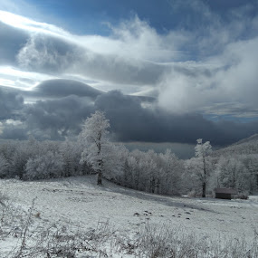Snow by Tatjana Petric - Landscapes Weather ( clouds, sky, mountain, snow, trees )
