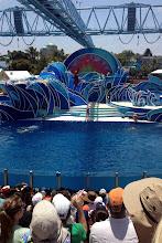 Photo: SeaWorld San Diego http://ow.ly/caYpY