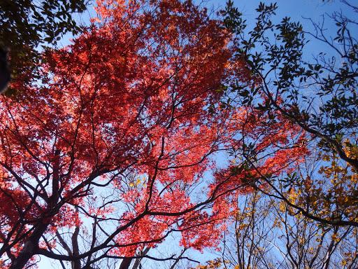 所々で紅葉が綺麗に2