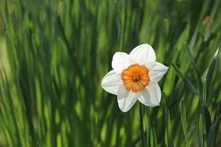 De lente is in aantocht