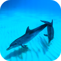 Wild Dolphins Video Wallpaper icon
