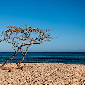 Camara Island by Jon Gonzales - Nature Up Close Flowers - 2011-2013 ( sand, tree, island )