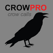 REAL Crow Calls + Crow Sounds