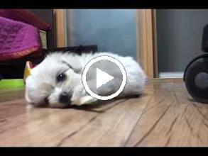 Video: [동영상] 껌 씹는 사랑씨~