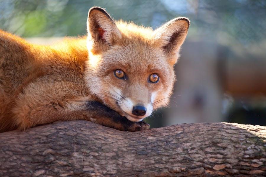 by Glenn Weaver - Animals Other Mammals