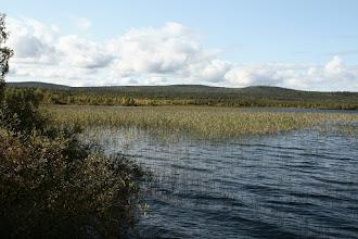 Photo: Alajärvi on kaislan peittämä