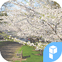 Cherry Blossom Story theme icon