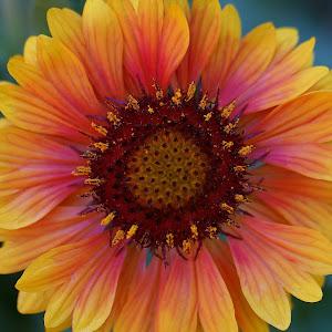FlowerA1.jpg