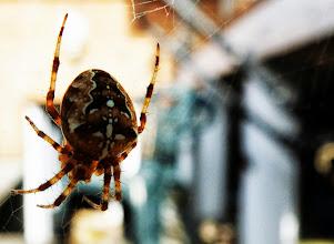 Photo: Boris the Spider