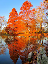 Photo: Bright orange trees reflected in a pond at sunset at Eastwood Park in Dayton, Ohio.