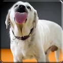 犬のなめは4Kビデオライブ壁紙を選別 icon