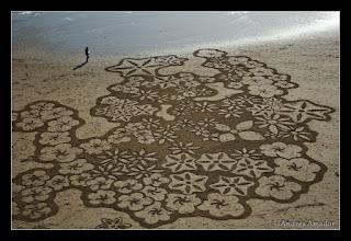 Photo: 'Flowers', Ocean Beach, SF..