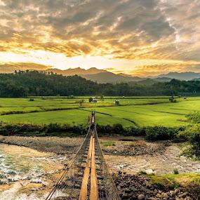 Rice Fields In Sunrise by Ted Khiong Liew - Landscapes Prairies, Meadows & Fields ( water, sky, rice, green, bridge, sunrise, rocks, river, fields )