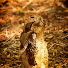 Gimme My Carrot by Linda Tiepelman - Animals Other ( forest park, arch, saint louis zoo, feathered friend, saint louis, feathers, ground squirrel, bird, prairie dog, missouri, zoo, beak, brown, rodent, dog, animal )