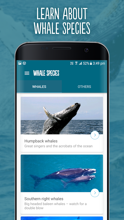 Wild About Whales- screenshot