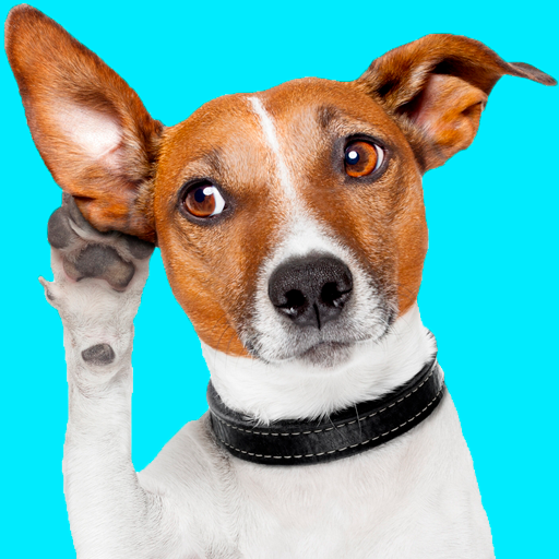 Тест: какая порода собаки тебе подходит