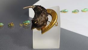 Kelvingrove Art Gallery and Museum 1 thumbnail