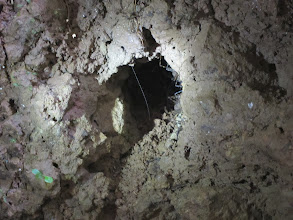 Photo: Spiders in a hole