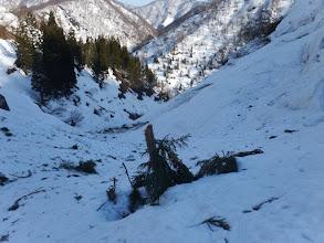 雪崩で木の先端が切られ