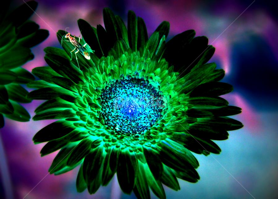by Shrikrishna Bhat - Nature Up Close Flowers - 2011-2013