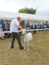 Photo: Rubriek 3: eenjarige witte geiten. 1a. Anne.