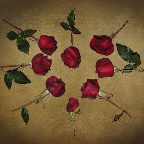 Heart of Roses by Sharon Pierson - Public Holidays Valentines Day