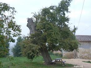 Photo: Après la tempête de début 2009 qui a aussi touche le Gers