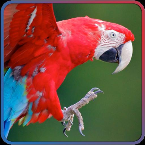 儿童趣味动物智力拼图 教育 App LOGO-硬是要APP
