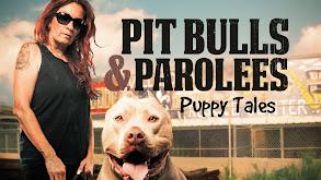 Pit Bulls & Parolees: Puppy Tales thumbnail