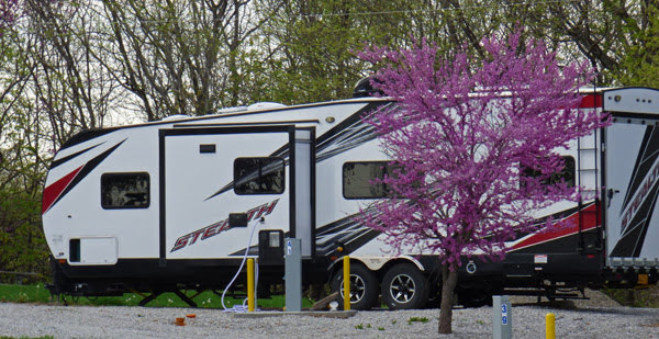 Redbuds at Blue Springs Lake Campground, Lee's Summit, MO