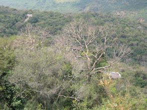 Photo: mostly scrub jungle.