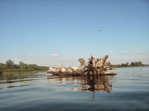 Photo: na jeziorze Włocławskim