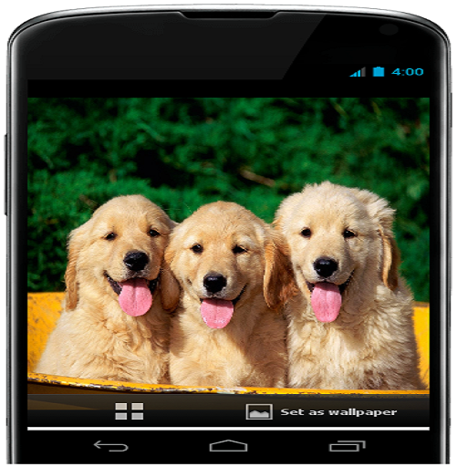 Cute Dog Wallpapers Free Download Apps Bei Google Play