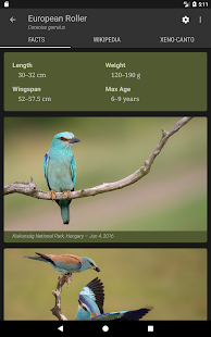 Bird Guide Europe- screenshot thumbnail