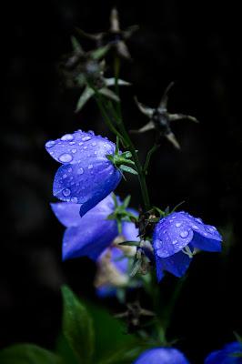 Pioggia di IKS