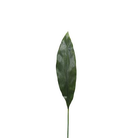 Aspidistra blad 75 cm