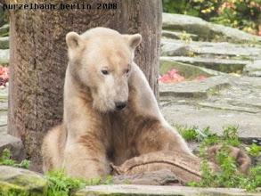 Photo: Knut mit Jutesack in seiner Schlafkuhle ;-)