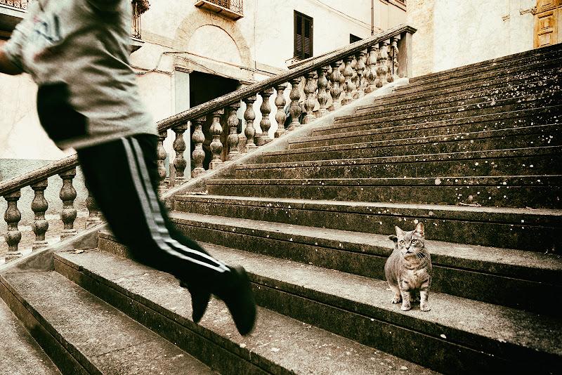 Scala con gatto di renzodid
