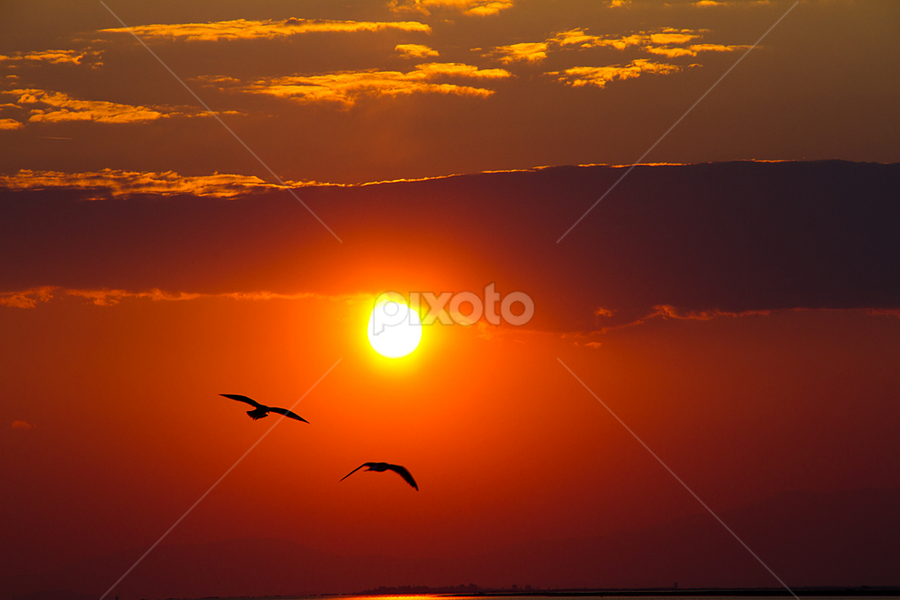 Birds go home by Rico Besserdich - Landscapes Weather ( sunset, birds )