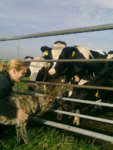 Photo: Kyra maakt kennis met koeien