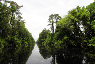 Photo: A Cloudy day in the Dismal Swamp