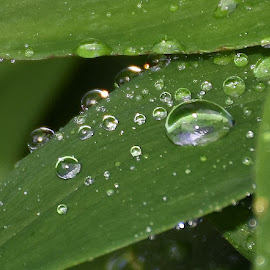 water droplets  by Zhenya Philip - Nature Up Close Natural Waterdrops ( droplets, nature, earth, water, photography,  )